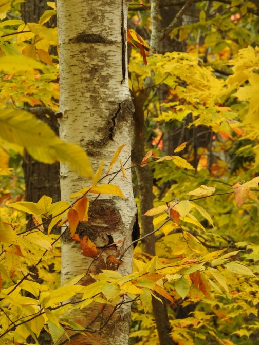 Fall Colors on the North Country Trail