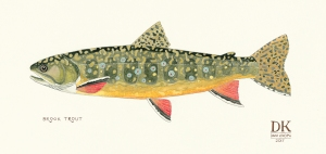 BROOK_TROUT_Dani_Knoph
