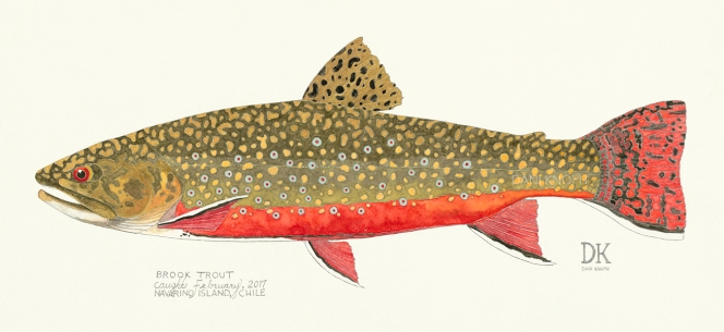 CHILEAN_BROOK_TROUT_Dani_Knoph