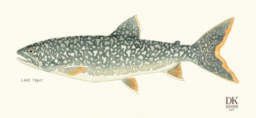 ELK_LAKE_TROUT_Dani_Knoph